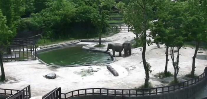 Salvan al bebé elefante al caer al agua