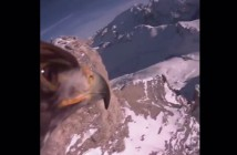 aguila-gopro-red-bull-italia-alpes