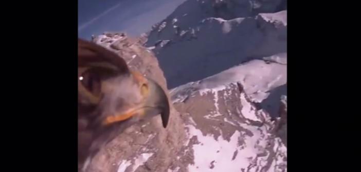 El increíble vuelo de un águila sobre los Alpes