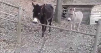 burro-inteligente-liguria-valla-italia