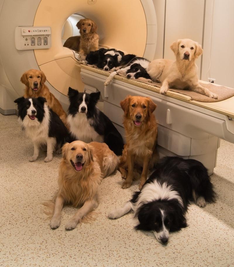 escaner-perro-universidad.emory-en-que-piensan-los-perros-