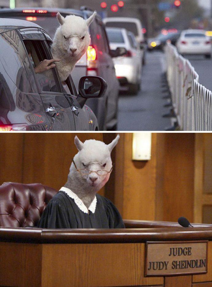 foto-photoshop-llama-coche-juez