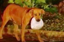 lilica-perra-brasil-chatarra-comida-solidaria-