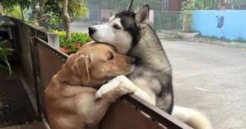 perro-escapa-abrazar-vecino-audi-messy-tailandia