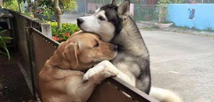 ¡Un perro se escapa para abrazar a su vecino!