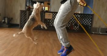 perro-purin-record-guinness-salto-con-una-persona