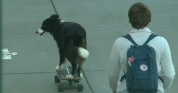 perro-skater-monopatin
