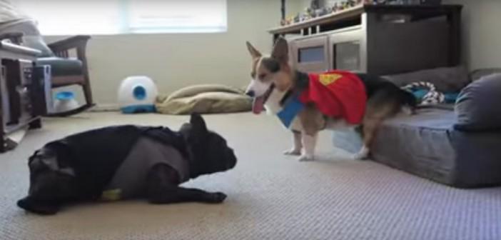 <i>Batman vs Superman</i> ¡en versión canina!