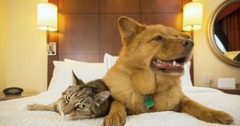 pet-motel-brasil-mascotas-perro-hotel
