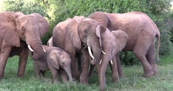 elefantes 2