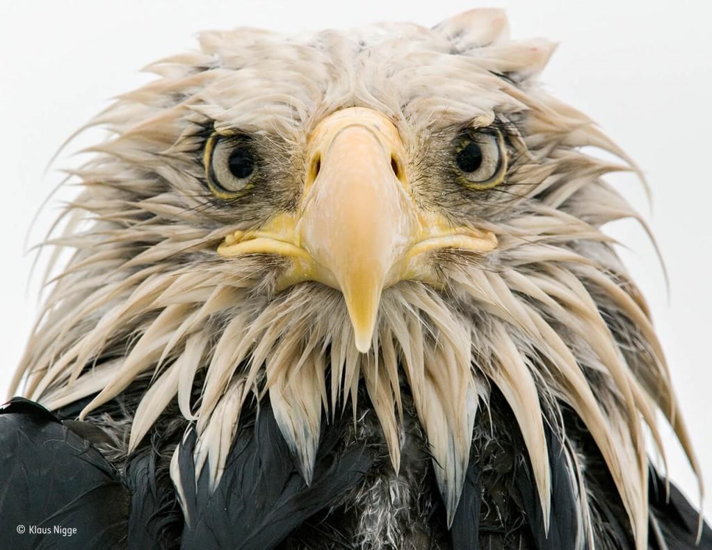 las-fotografias-ganadoras-del-wildlife-2017-1