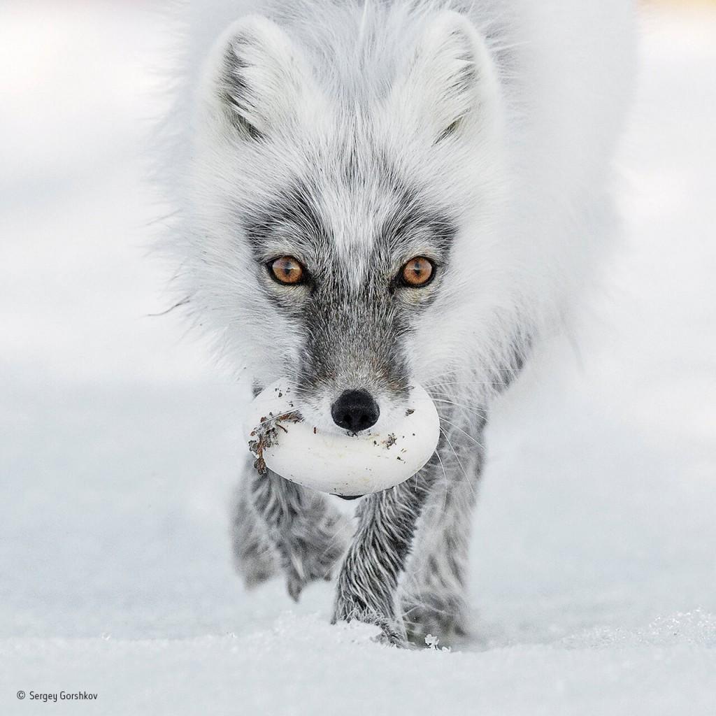 las-fotografias-ganadoras-del-wildlife-2017-3