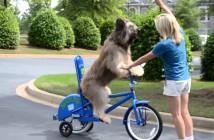 norman-perro-ciclista-estrella-tele