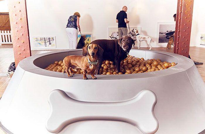 primer-museo-de-perros-1