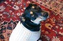 Sully-el-perro-que-finge-estar-malito-para-no-quedarse-solo