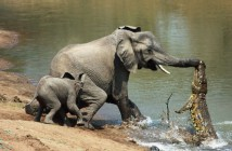 cuando-los-animales-salvan-a-otros-animales