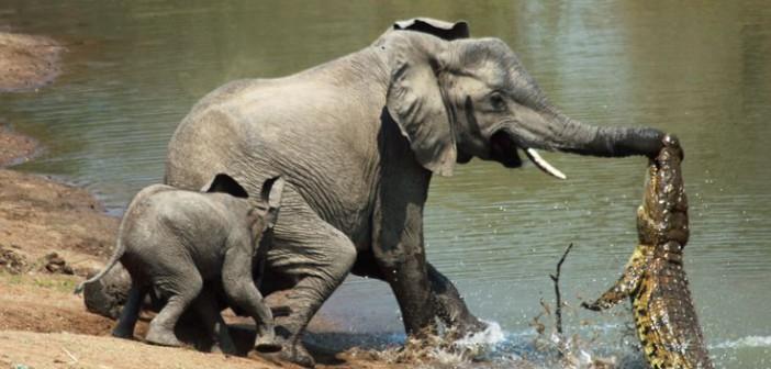 Cuando los animales salvan a otros animales…
