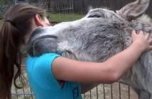 el-amor-del-burro-por-su-duena
