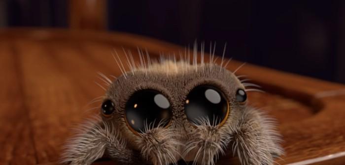 Lucas, ¡la adorable arañita!