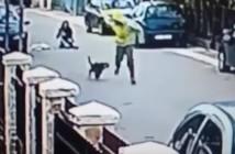 salvada-de-un-atraco-por-un-perro