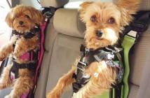 seguridad-para-tu-perro-en-el-coche