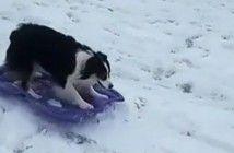 la-habilidad-de-secret-para-esquiar