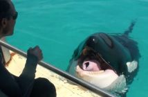 la-orca-que-habla