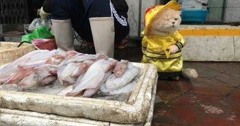 El-gato-que-vende-pescado-3