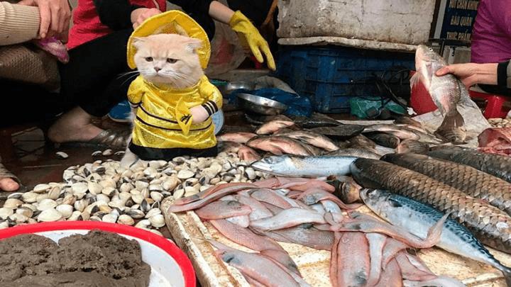 El-gato-que-vende-pescado