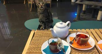 Polineko-nuevo-cafe-de-gatos-en-Madrid-1