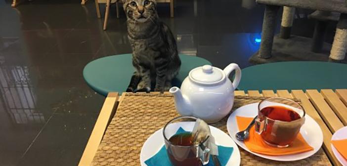 <i>Polineko</i>, nuevo café de gatos en Madrid