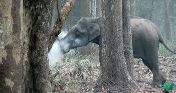 el-elefante-que-fuma