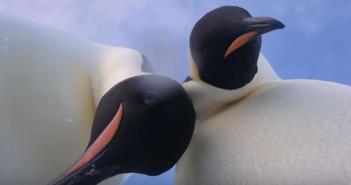 el-famoso-selfie-de-los-pinguinos-emperadores