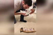 Chihuahua-conoce-a-recien-nacido