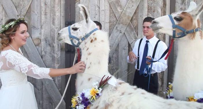 Llamas-para-las-bodas-2