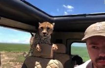 el-guepardo-que-se-cuela-en-el-coche
