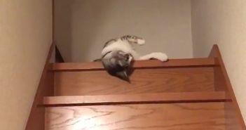 gato-baja-las-escaleras-perezosamente