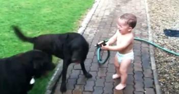 se-troncha-de-risa-regando-a-sus-perros