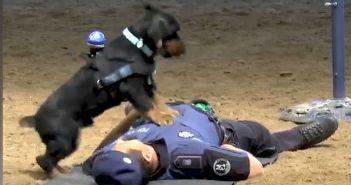 poncho-el-heroe-policia-capaz-de-hacer-un-rcp