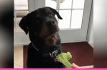 perro no le gusta la verdura
