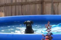 pillado-en-la-piscina-por-su-dueno